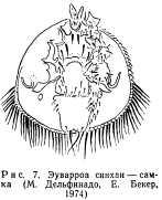 klewevye-bolezni-pchel-7.jpg