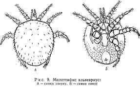 klewevye-bolezni-pchel-9.jpg