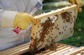 Пчеловодство на Кубе выходит на новый уровень своего развития